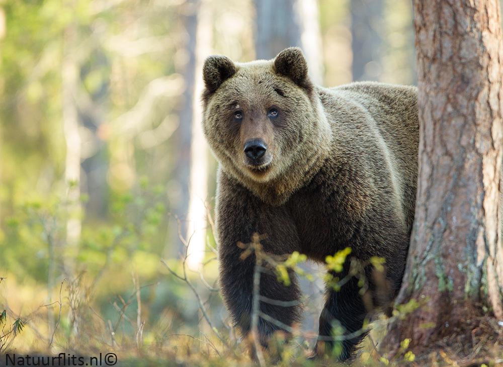 bruine-beer-achtergrond-licht
